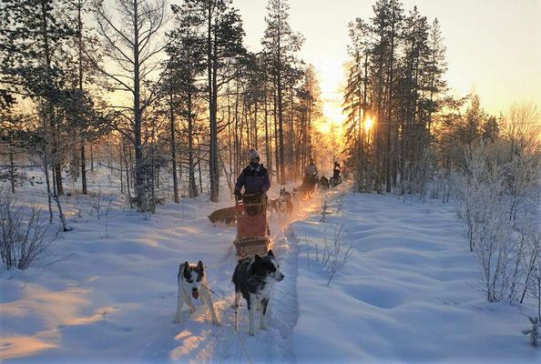 Huskytouren im weißen Schnee