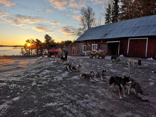 Lappland & Hundegespann