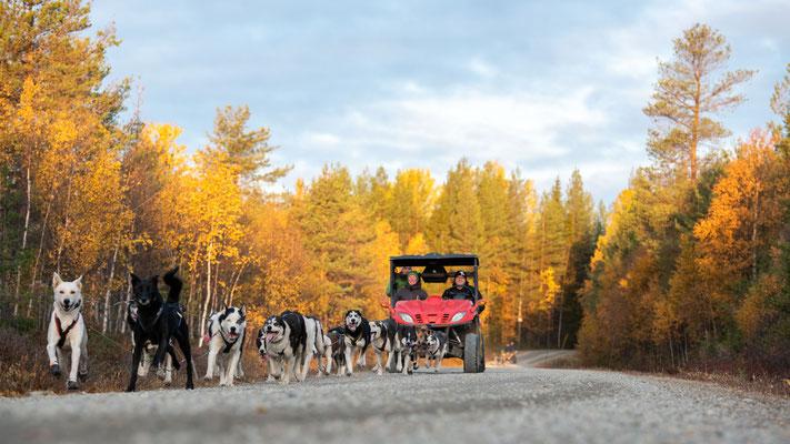 Schlittenhunde Abenteuer in Schweden