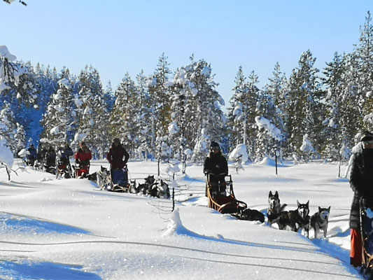 Huskytouren durch Lapplands unendliche Weiten