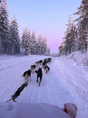 In Lappland auf Huskytour