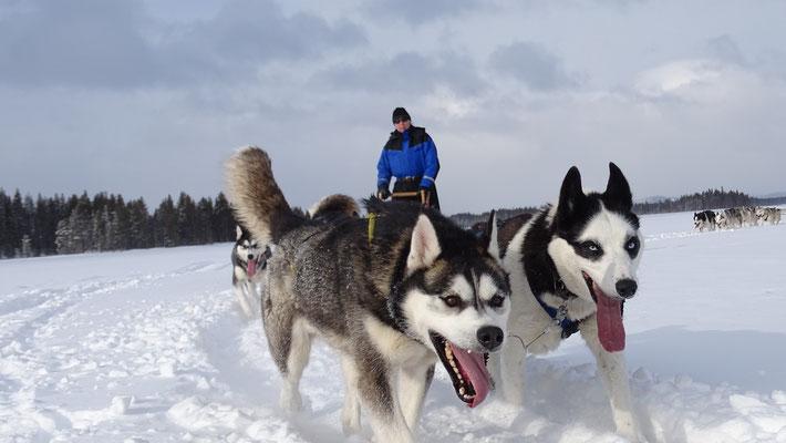 Huskytouren durch Lappland