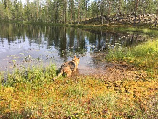 Einmalige Natur Schweden im Sommer erleben