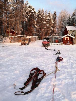 Huskyfarm in Schweden
