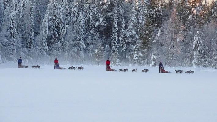 Schlittenhundefahrten in Lappland