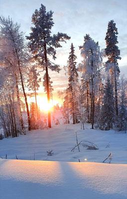 Ein Lappland Wintermärchen