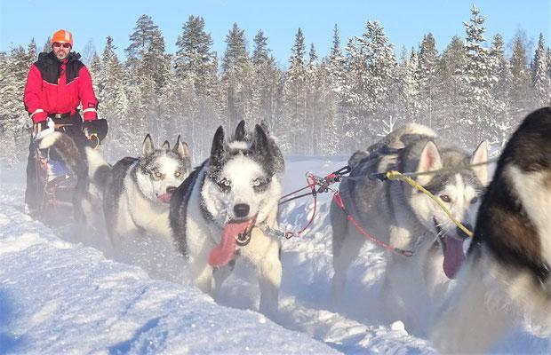 Husky & Winterurlaub in Schweden