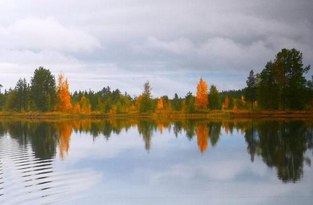 Das Tor zum Herbst in Lappland ist offen