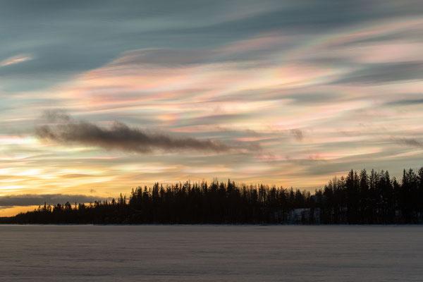Huskyfarm Lapplands Drag in Lappland