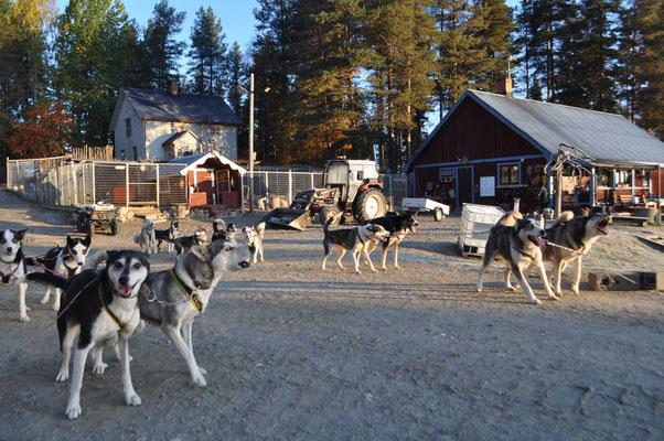 Huskyfarm und Schlittenhunde