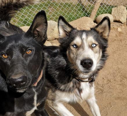 Yuma und Balto freuen sich, gleich gehts raus