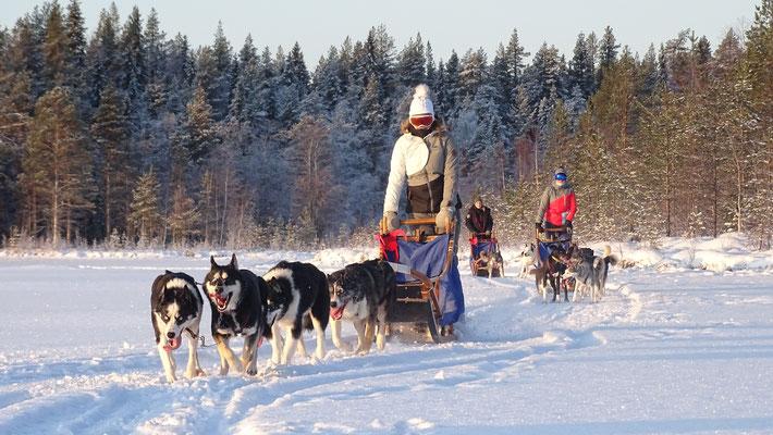 Mit den Hundegespannen in Schweden unterwegs