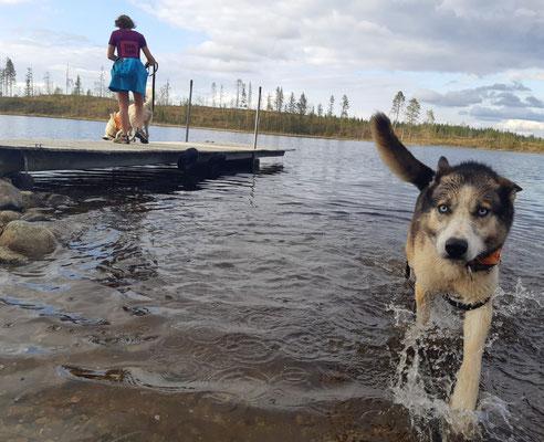Joda plantscht gerne im Fluß, ein starker Arbeiter im Winter