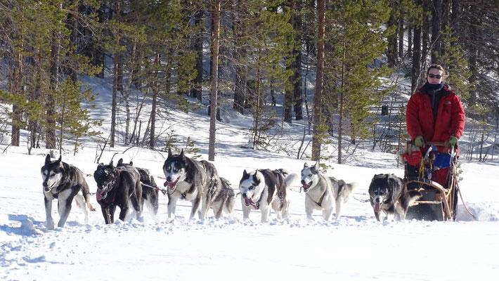 Hundeschlittentour in Schweden