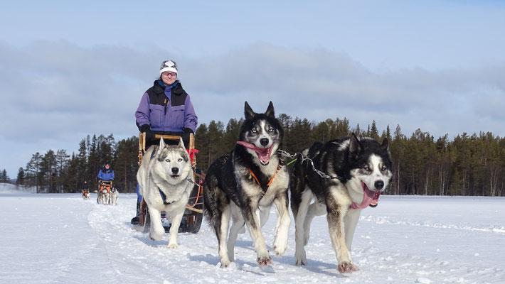Schlittentour in Lappland mitmachen?!