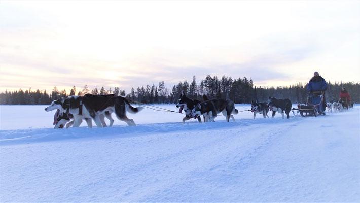 Winterurlaub auf dem Hundeschlitten erleben!?