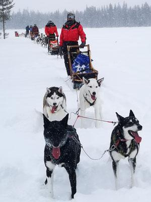 Huskytour bei Schnee und Wind