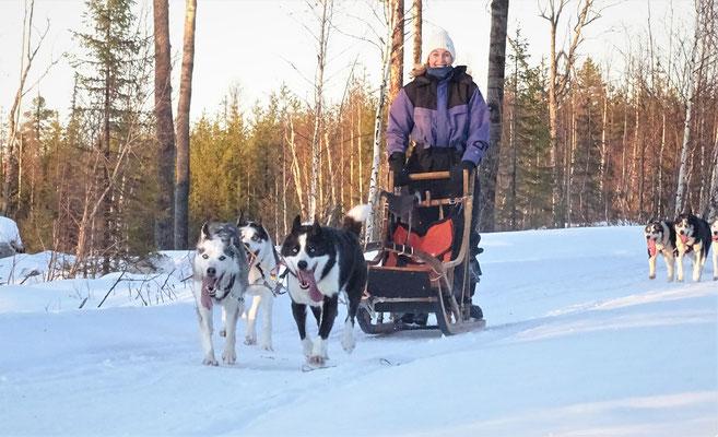 Winterurlaub im schneeweissen Schweden
