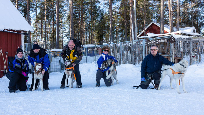 Spazieren mit Schlittenhunden