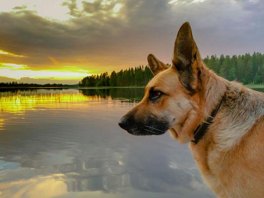 Buffy im Sonnenuntergang