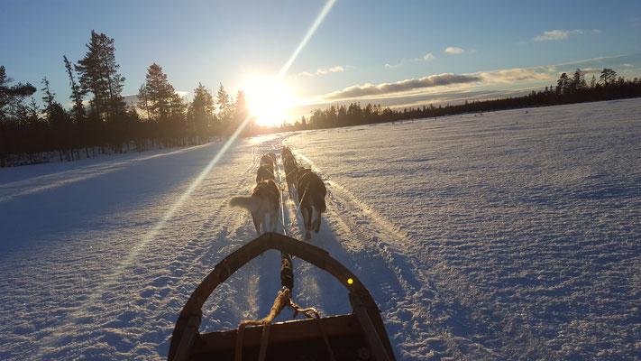 Hundeschlittentouren durch Lapplands Wildnis