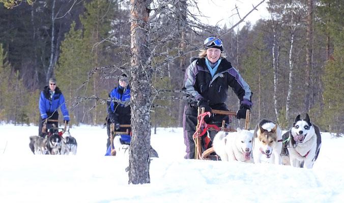 Auf Hundeschlittentour durch lapplands Weiten