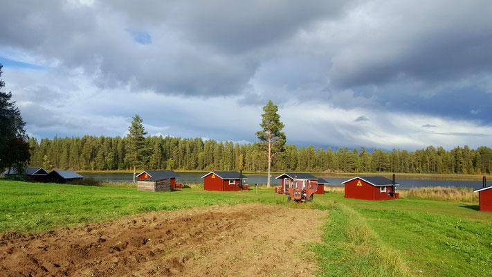 Unsere Huskyfarm mit Kartoffelacker in Lappland