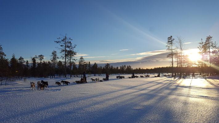 Lappland und Huskytouren