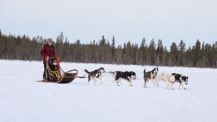 Hundeschlittentouren durch unberührte Natur