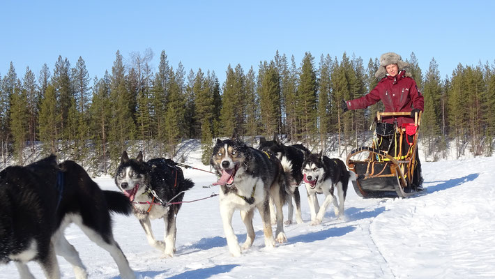 Schweden Hundeschlitten Touren