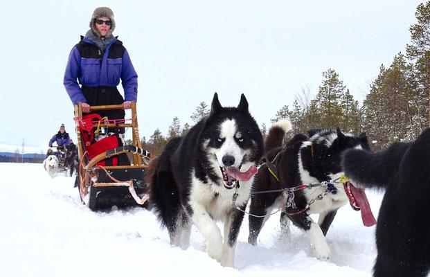 Lapplands Drag Huskyfarm & Huskytouren