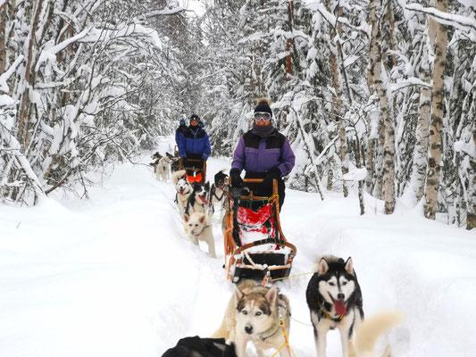 Huskytour durch Lapplands Weiten