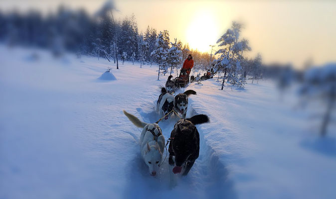 Auf Huskytour durch Lappland