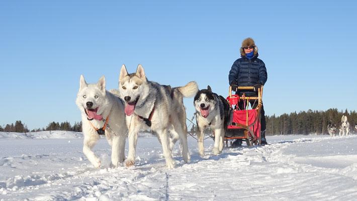 Hundeschlittentouren in Lappland