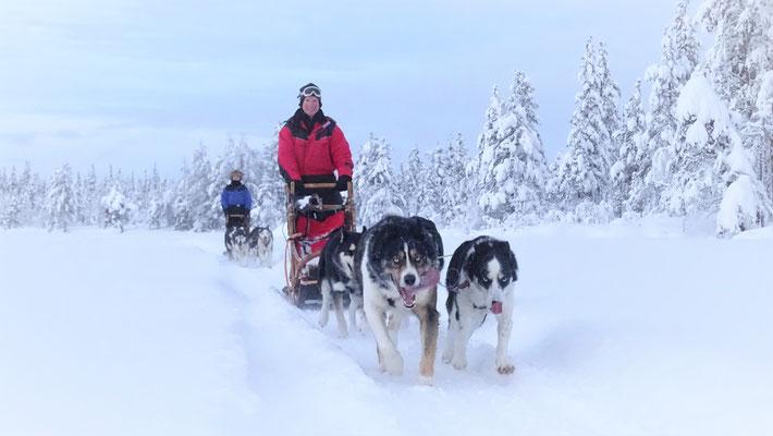 Hundeschlittentouren durch Schwedens Weiten