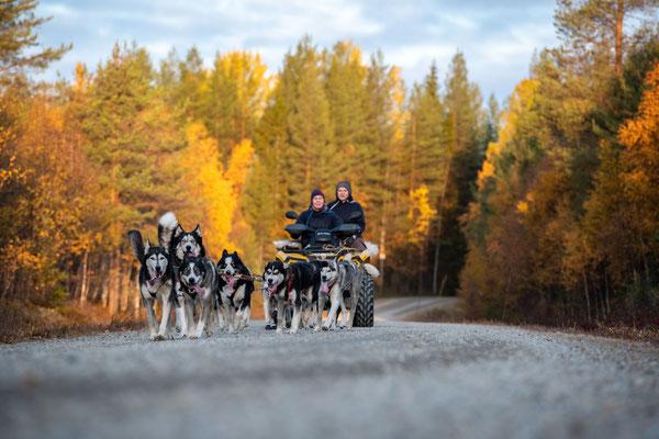 Siberian Husky kennel in Lappland