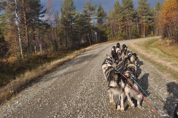 Vorbereitungen für die Huskytouren im Winter