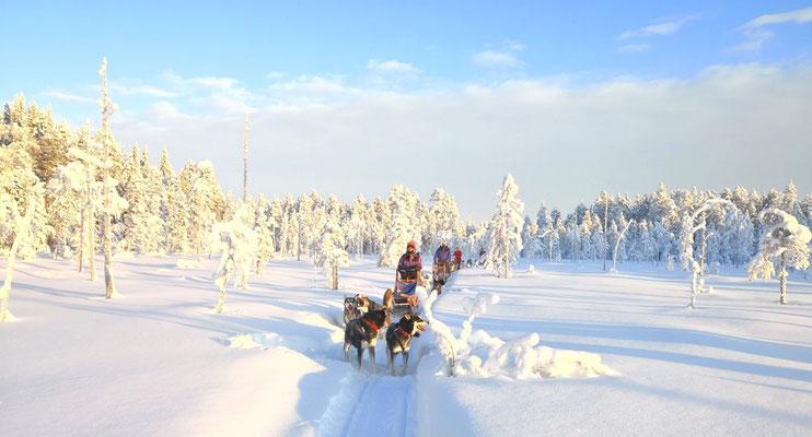 huskytouren in Lappland durch die einsame Wildnis Skandinaviens