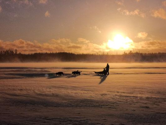 Huskytouren durch Lapplands eisige Weiten