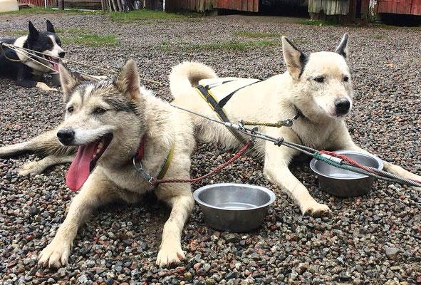 Wally und Anyo ruhen sich aus nach der Huskytour