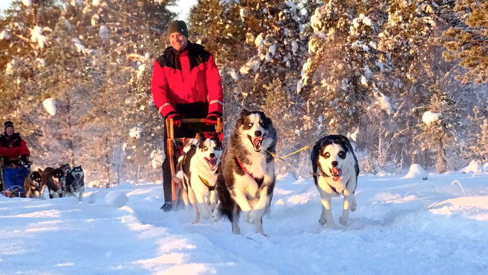 Huskytouren in Schweden