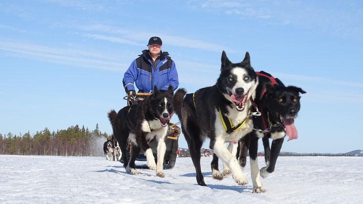 Mit dem Hundeschlitten auf Abenteuertour
