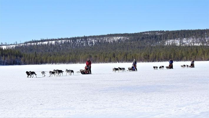 Auf Huskytour durch Lapplands Weiten