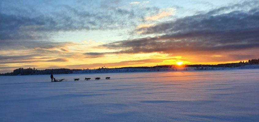 Huskytouren im Winter Traumland