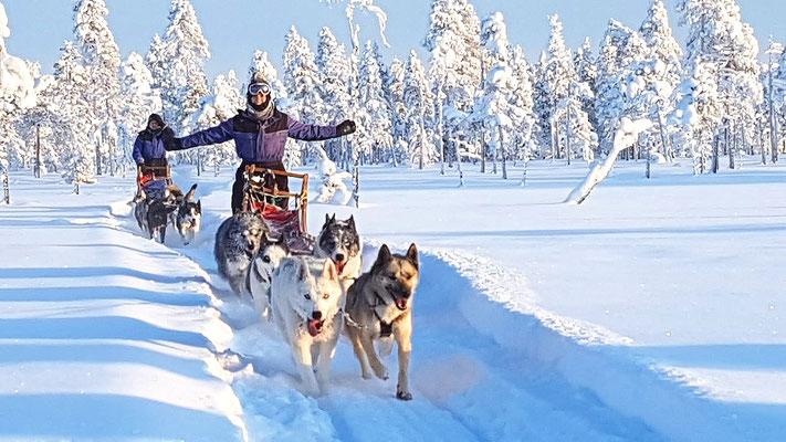 Schlittenhundetour durch Lapplands Weiten
