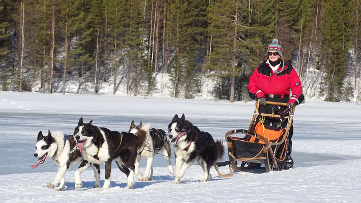 Schlittenhundetouren in Skandinaviel erleben