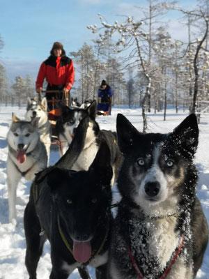 Wintertraum in weiss- Lappland