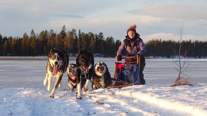 Winterurlaub auf einer Huskyfarm in Schweden