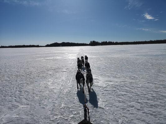 Schlittenhundetouren in die unendlichen Weiten Lapplands