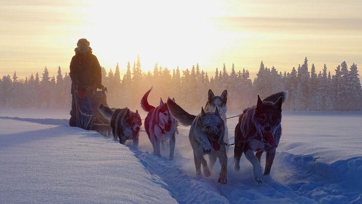 Hundeschlittentouren in Schweden